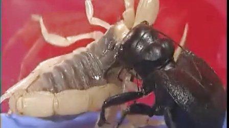 虫皇帝之昆虫军vs毒虫军(1)