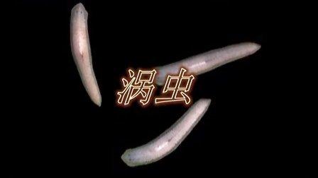 涡虫内部结构图