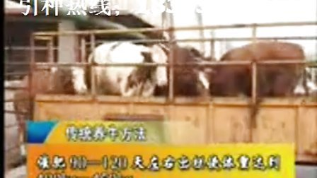 肉牛养殖场利木赞牛的价格视频