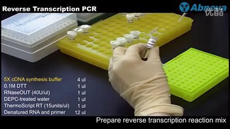 Reverse Transcription PCR(逆转录PCR)