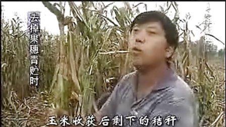 秸秆青贮饲料发酵技术养牛技术视频