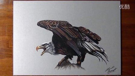 老鹰-超逼真手绘