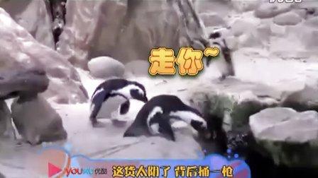 """【轻松时刻】动物也使坏 腹黑""""损友""""伤不起"""