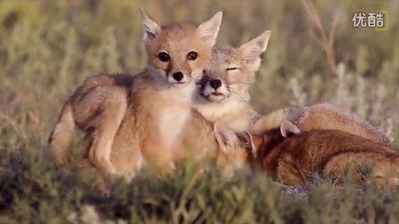 [k分享] 萌萌哒小动物们