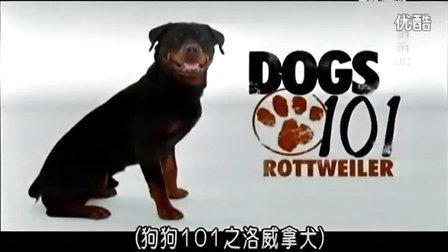 【狗狗101 - dogs101】【中文字幕】【动物星球频道】