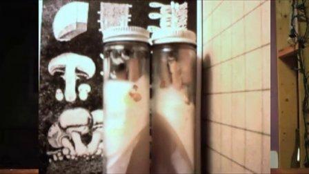 食用菌菌丝和菌丝体训练蘑菇菌丝实�j激进的真菌�\视频95食用菌shiyongjun