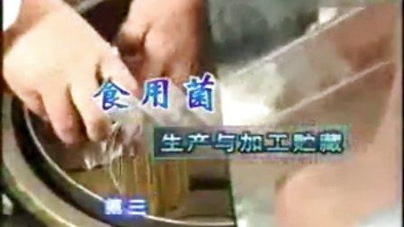 新食用菌生产与储存技术与方法_高清视频食用菌shiyongjun