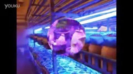菇�栽培LED植物�粝地�LED植物�舭镏�菇�快速生长,食用菌shiyongjun