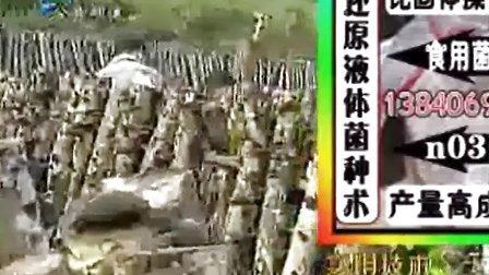 种植椴木黑木耳栽培技术_高清视频食用菌shiyongjun