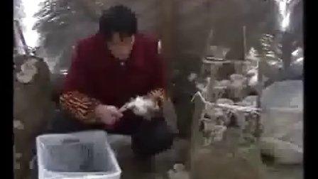 稻草菌块栽培平菇高产种植技术_高清视频食用菌shiyongjun