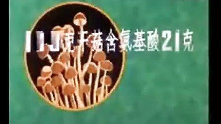 金针菇高产栽培的几项重要措施_金针菇高产栽培方法_高清视频食用菌shiyongjun