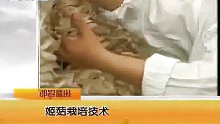 种植姬菇规模工厂化高产栽培技术_高清视频食用菌shiyongjun