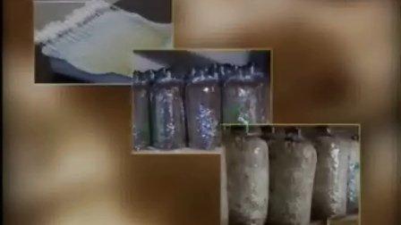 怎样种植灰树花及菌种制作步骤栽培技�c,食用菌shiyongjun