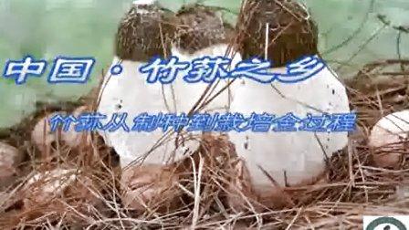 竹荪如何种植方法之织金竹荪栽培技术培训_高清视频食用菌shiyongjun