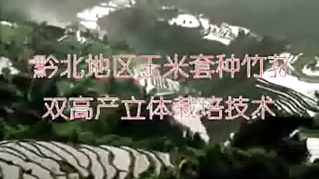 东北地区玉米套种竹荪双高产立体栽培技术_高清视频食用菌shiyongjun