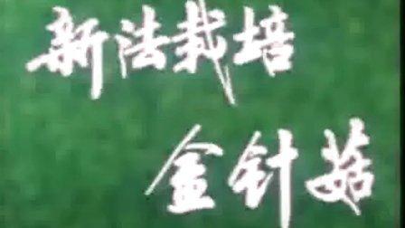 新法栽培金针菇之新法金针菇的种植和管理方��,食用菌shiyongjun