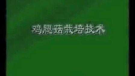 鸡腿菇袋装种植技术之食用菌栽培技术系列讲��,食用菌shiyongjun