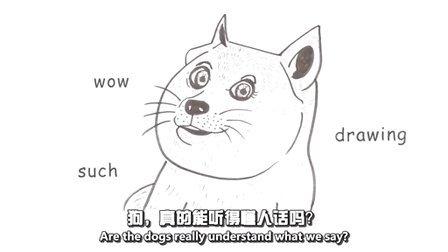 分钟学堂(70):狗是如何理解人的?