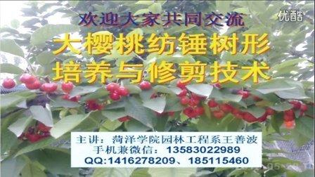 大樱桃纺锤树形培养与修剪技术(上)视频