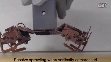 新型蟑螂机器人 承受900倍于体重压力
