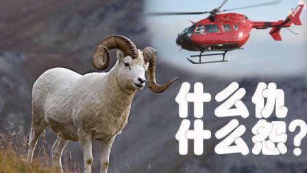 獵奇新闻  老美炫富用直升机抓羊?