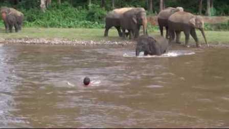 大象在河中拯救人类