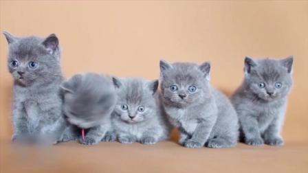 可爱小猫咪们端坐成一排很安静, 眼睛瞪的圆圆的, 真可爱