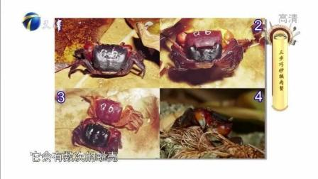 挑梭子蟹有3招, 只要一部手机, 就可以让你挑到蟹黄满满的螃蟹