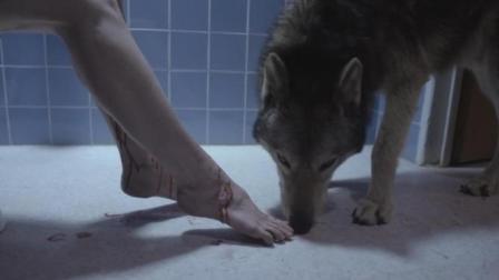 白领美女上班路上偶遇一匹狼, 带回家之后, 一段人狼恋由此开始