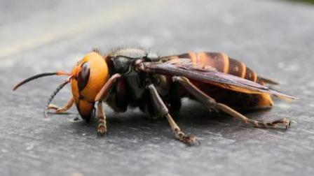 夺命毒蜂 –