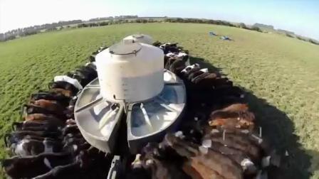 现代科技奶牛养殖场,全器械化打扫养殖,感觉要失业的节奏视频