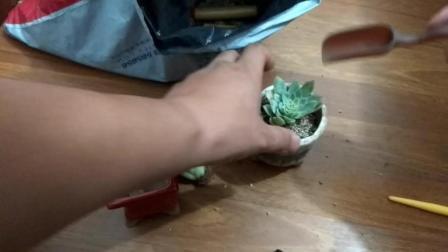 紫罗兰的养殖方法和注意事项多肉植物图片及名称视频