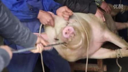 贵州安顺龙宫农村办酒, 猪大哥是少不了的