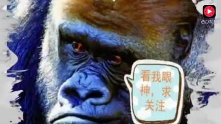 搞笑动物合集, 上一秒还是王者, 下一秒变成了青