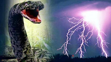 蟒蛇千年可化蛟? 揭秘95年安微巨蟒渡劫事件真相 40