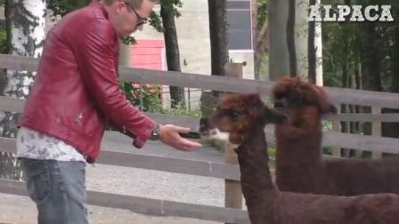 不同动物对魔术表演的反应, 第三个动物反应你想