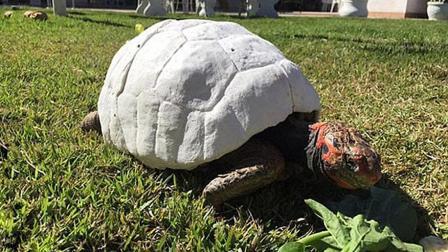 科技改变龟身, 设计师用3D打印技术为乌龟打印新龟壳!