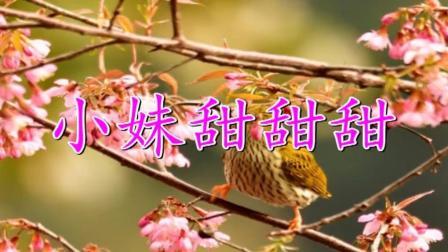 杨钰莹《小妹甜甜甜》声音超甜  清纯女神