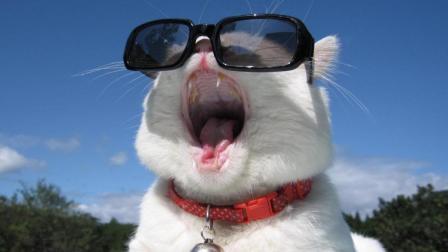 动物搞笑视频|这年头狗和猫都成精了!