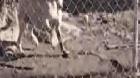 动物搞笑视频精选, 笑死了