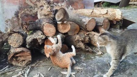 #冬日吸猫#【猫咪趣事】可爱的小猫咪萌萌哒13