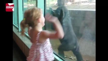 爆笑! 细数那些在动物园被猛兽袭击的小孩