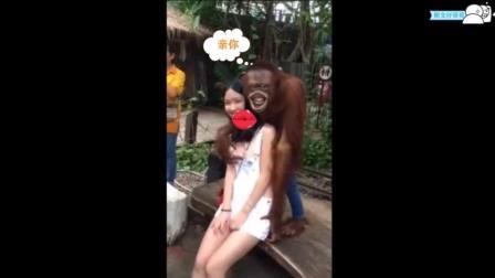 许华升-美女与大猩猩互动的那些事让你棒腹大笑
