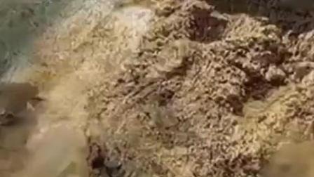 """粪堆里捡到""""太岁"""", 泡水中瞬间长到70公斤, 专家得知出百亿收购"""