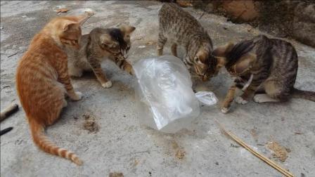 #冬日吸猫#【猫咪趣事】玩泡末袋的可爱小猫咪