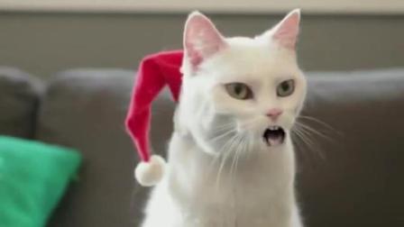 史上最搞笑的猫咪配音, 听一次笑一次, 太逗了