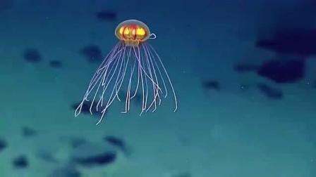 科学家探索7000米深海! 未知生物曝光, 长相超怪异