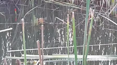 钓鱼视频v视频男子逗钓,结果遇到大鱼咬钩,瞬间徐诗草窝图片