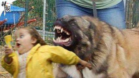 【整点辣报】你的娃不如我的狗/火海中救出被困