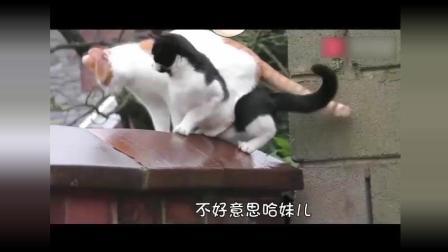 超搞笑动物配音, 四川方言